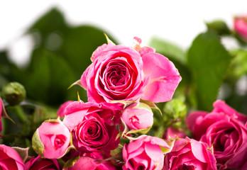 Fresh roses on wood desk