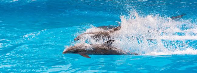 Zwei Delfine bei einer Show