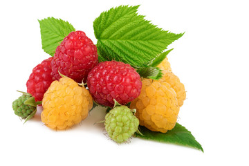 Isolated raspberry. Yellow and red raspberries with leaves isolated on white background