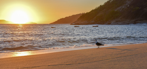Seagull and beautiful sunrise at the Red Beach near the Sugarloaf Mountain, Rio de Janeiro, Brazil