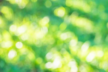 Green Natural Bokeh, blurred bokeh.