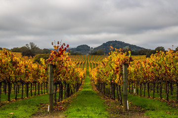 Wall Murals Vineyard vineyard