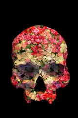 Skull with Roses in double exposure isolated on black background.