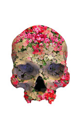 Skull with Roses in double exposure style.