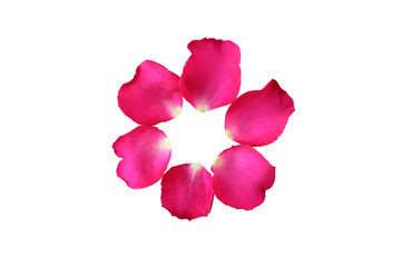 Circle of pink Rose petals on white background.