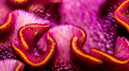 Floral vibrant color floral macro flower portrait of  the inner of a celosia flowerscape in pink and orange with detailed texture and structure, beautiful close-up of an unusual exotic flower blossom