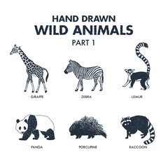 Hand drawn textured wild animals icons set with giraffe, zebra, lemur, panda, porcupine, and raccoon vector illustrations.