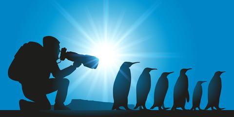Pingouins - photographe - Manchot - iceberg