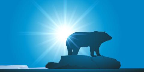 Ours Blanc - Réchauffement climatique - Banquise