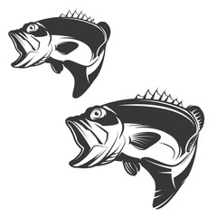 Set of bass fish icons isolated on white background.
