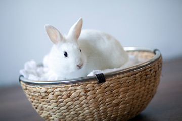 snow-white rabbit sitting in a wicker basket