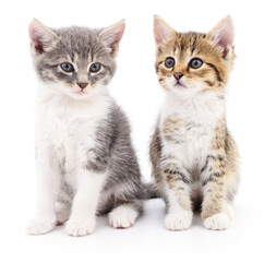Wall Mural - Two small kittens