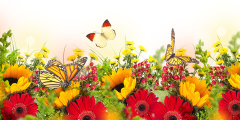 Wall Mural - Amazing background with daisies and sunflowers. Yellow and red flowers on a white blank. Floral nature card. Flower and butterfly bokeh.