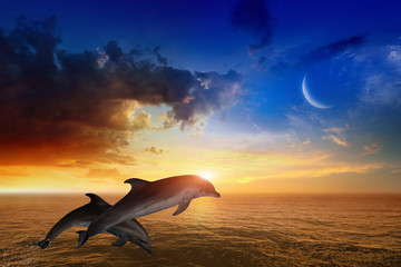 Foto op Canvas Dolfijn Marine life background - jumping dolphins, glowing sunset