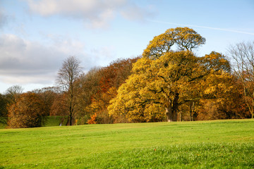 Beautiful autumn landscape with coloured trees, blue sky and green field.