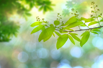 sun beams and green leaves, nature spring background