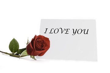 Red rose with I Love You card