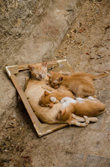 Moroccan mother cat sleeping with four kittens in a picture frame in the streets of Tetouan, Morocco