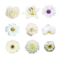 collection of various white flowers contain with rose, Lilly, Chrysanthemum, orchid, dahlia, daisy, gerbera