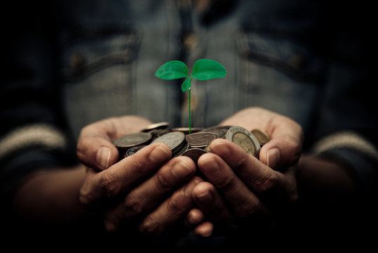 A coins with tree in people hands in saving and growing money co