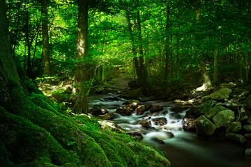 Bemooste Baumwurzel vor idyllischem Wasserfall, Ilsetal, Harz