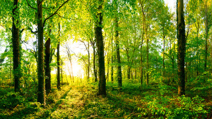 Frühling im Wald bei Sonnenaufgang