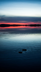 Sonnenuntergang mit Enten am See