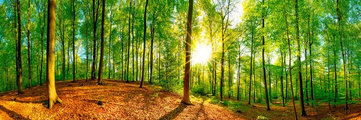 Wald Panorama im Frühling bei strahlendem Sonnenschein