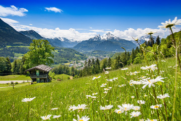 Blooming meadow with alpine hut in front of Watzmann Wall mural