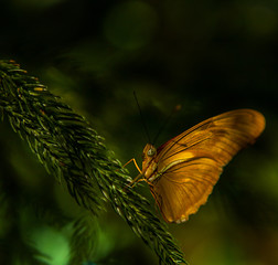 Yellow big butterfly sitting on green leaves, beautiful insect in the nature habitat