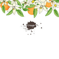 Fruit frame with isolated hand drawn oranges and flowers in sket