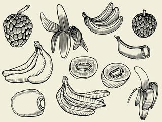 Tropical Fruits Set.