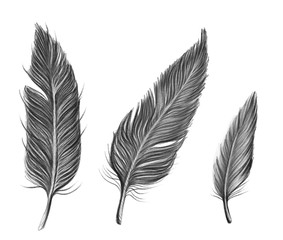Drawn by pencil black set of feathers, isolated illustration by hand