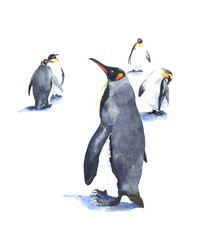 Penguins watercolor painting illustration isolated on white background handmade