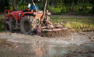 Farmer using tiller machine in rice field, preparing soil before planting rice.