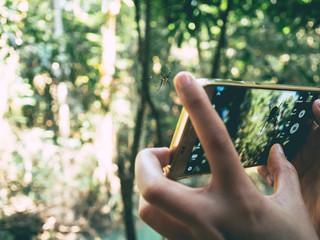 Take nature photo with smartphone.