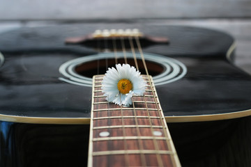 guitar string daisy