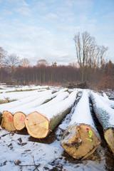 Kłody drzewa, dąb, zima