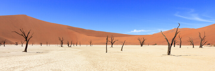Dead tree in Sossusvlei Namibia
