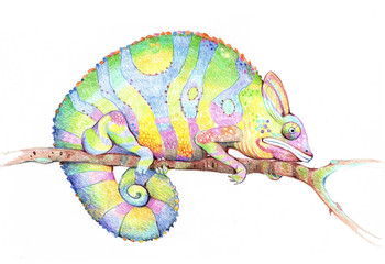 Chameleon, illustration, drawing,