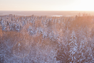 Snow covered Evergreen forest at golden hour