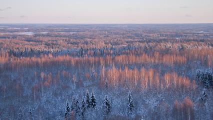 Snowy birch tree tops lit up from sun rays