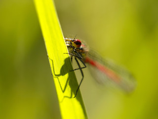 dragonfly sitting on the grass by the lake