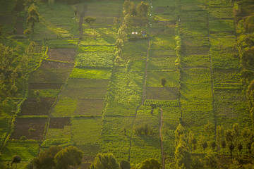 Small squared fields at sunset, Great Rift Valley, Kenya Wall mural