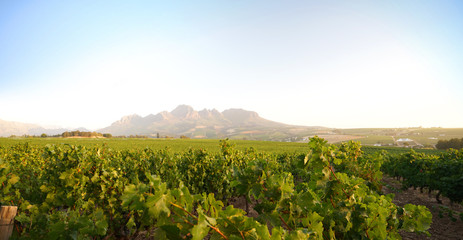 Photo on textile frame South Africa Stellenbosch vineyards, South Africa