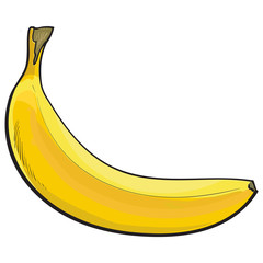 One unopened, unpeeled ripe banana, sketch style vector illustration isolated on white background. Realistic hand drawing of single unopened ripe banana