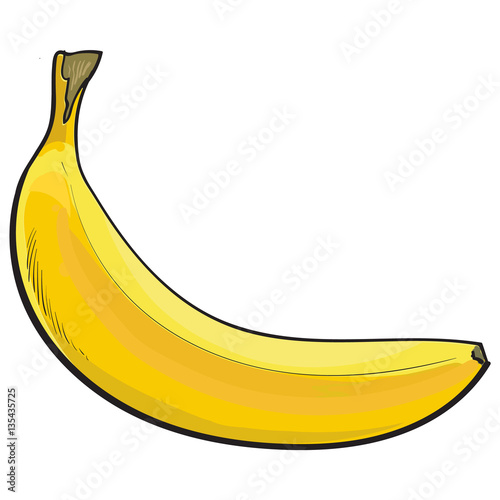 One Unopened Unpeeled Ripe Banana Sketch Style Vector Illustration Isolated On White Background