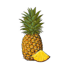 Whole, unpeeled, uncut, vertical pineapple and wedge formed slice, sketch style vector illustration isolated on white background. Realistic hand drawing of whole and wedge of fresh, ripe pineapple