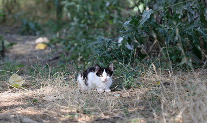 wild street cat