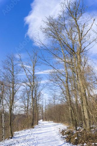 kahle b ume im winter imagens e fotos de stock royalty free no imagem 135449154. Black Bedroom Furniture Sets. Home Design Ideas